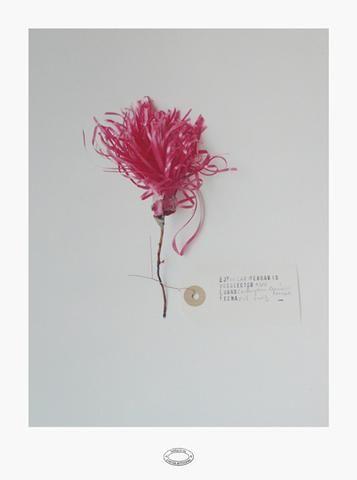Alberto Baraya, Herbario de plantas artificiales