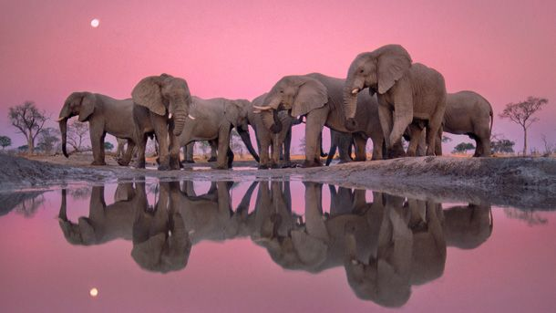 National Geographic Into Africa: The Photographs of Frans ...