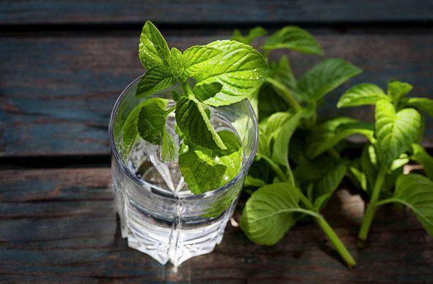 Napi 3 pohár, heti 1,5 kiló mínusz! Egyszerű fogyókúrás víz házilag | femina.hu