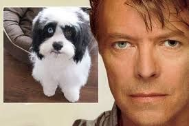 Image result for images of david bowie and iman's daughter