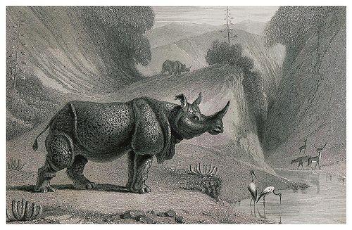 003-El rinoceronte-The oriental annual, or scenes in India..1835- William Daniell-© Universitätsbibliothek Heidelberg