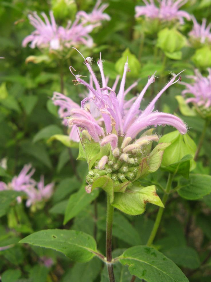Herbs For Depression: Eight Herbalists Share Strategies