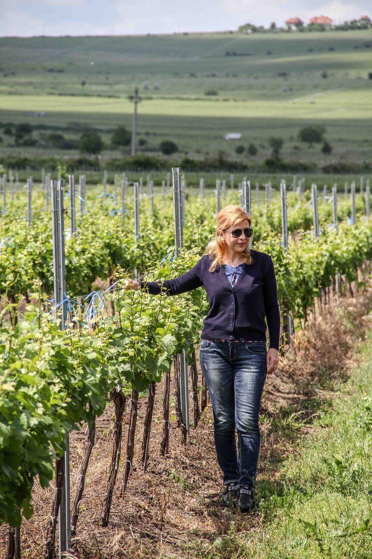 Oenologist Aurelia Visinescu is checking the grapes at Domeniile Sahateni winery.  Summer grapes crop.  https://www.facebook.com/AureliaVisinescuWines