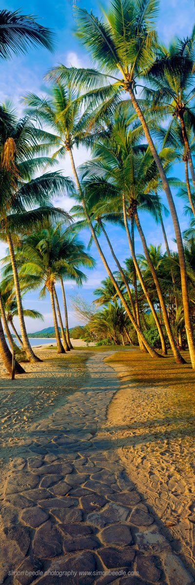 Tropical Beach | re-pinned by http://www.wfpblogs.com/category/toms-blog/  Early morning light washes over the magnificent palm trees that line the beach on North Queensland's exclusive Palm Cove.