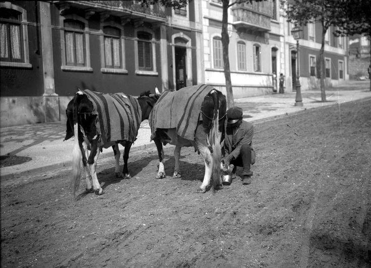 Ordenhavam-nas diante de nós, nas vacarias. E algumas vezes, até, ao ar livre das ruas, pois nesses tempos a cidade e o campo ainda se confundiam na igual doçura de trabalho espreguiçado (...)