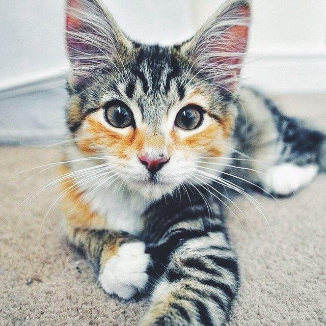 Andre Kertesz Polaroid 19 Cats Pretty Cats Cute Cats