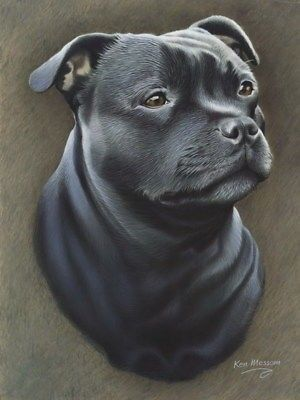 Pleasenote the Buy it now price is for an open edition print only and is standard size approx 16 x12 ready to mount and frame in standard stock. The Staffordshire Bull Terrier is a true people-dog. He