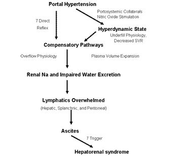 Hepatorenal Syndrome Anatomy | Complications of Portal Hypertension