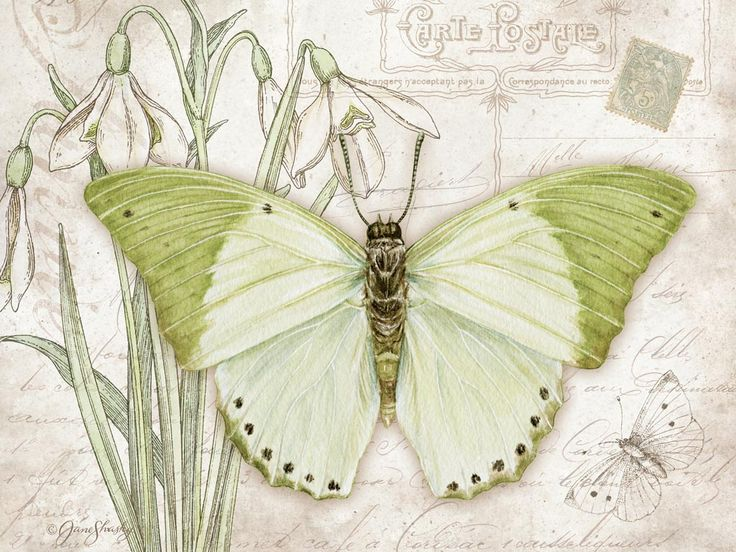 Lang - January 2015 Wallpaper | Butterflies