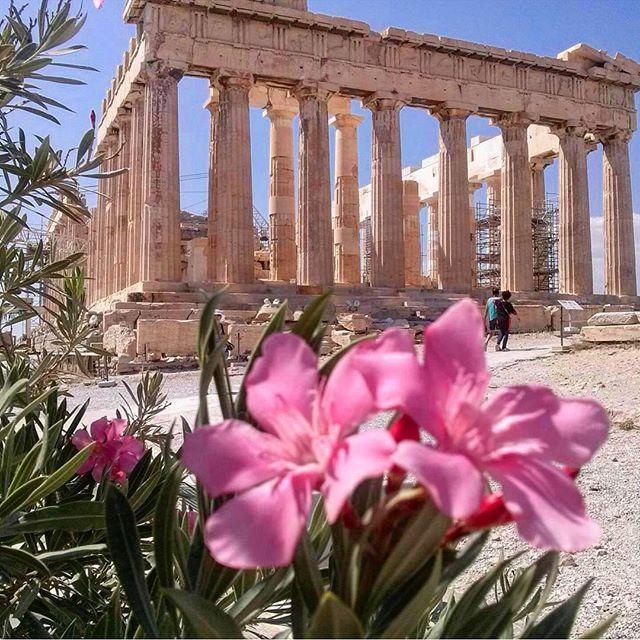 """The most copied building worldwide, the iconic 2500 year old Parthenon, has been voted """"Most Beautiful Building in the World"""" by Business Insider architects. READ FULL STORY IN OUR BIO LINK. #athens #parthenon #acropolis #greece #hellas #visitgreece #greek #greeks #greeklife #ilovegreece #greekgirl"""