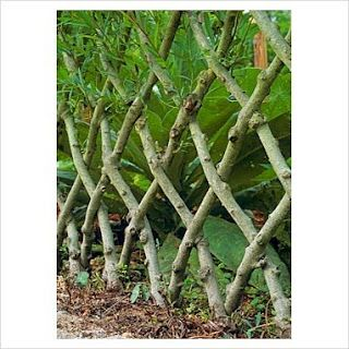 living willow fences - woven screen, arbours, bowers over seats, arches, tunnels, childrens play domes. Use them to support climbing plants such as roses, honeysuckle, golden hop or clematis.