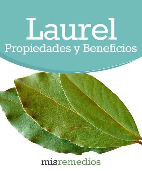 #Laurel - Propiedades y Beneficios #PlantasMedicinales