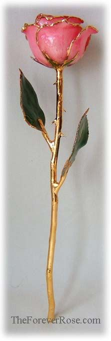 Pink Rose, gold dipped