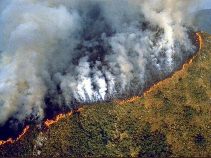 Pray For The Amazon Amazon rainforest deforestation