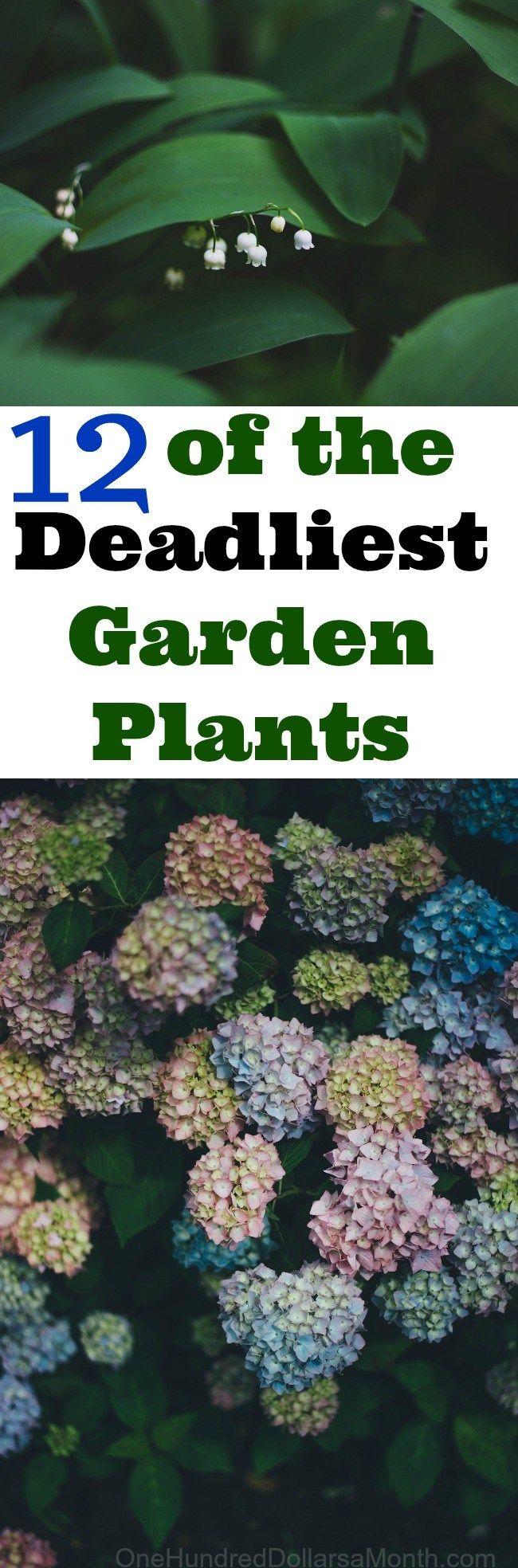 12 of the Deadliest Garden Plants, Garden Tips, Gardening Tips, Deadly Plants