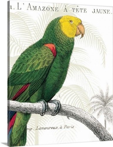 Pin On Parrot Photography