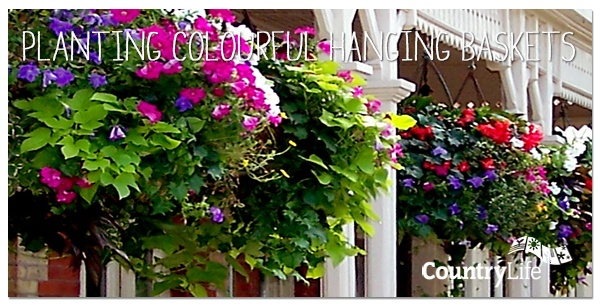 Read Angela's top tips on planting colourful summer hanging baskets. Hanging baskets are just the thing to brighten up a drab wall or fence, and perfect for positioning by your front door to welcome visitors. #gardening #tips #gardening