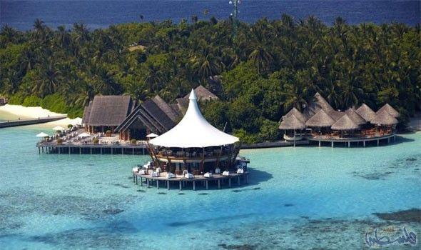 منتجع Maldives Resort Travel Nature Tree