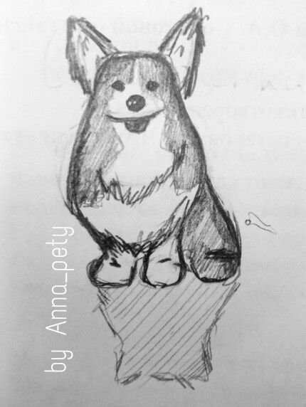 Corgi #by_Anna_pety #sketch #art