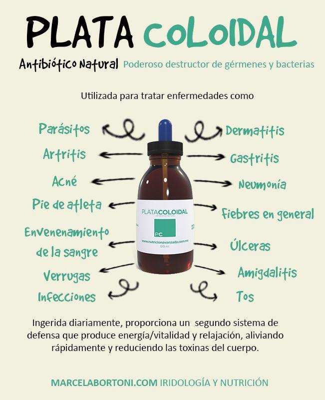 La plata coloidal es un antibiótico natural que ha sido utilizado desde muchos años atrás. Se considera un poderoso destructor de gérmenes y bacterias, que cada vez se vuelve más