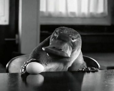 """Read more: https://www.luerzersarchive.com/en/magazine/commercial-detail/first-direct-bank-52930.html First Direct Bank First Bank: """"A Platypus Walks Into A Bar"""" [01:00]# Meet Barry, a platypus taking a stroll through his neighborhood. The CGI character took around ten weeks to create, and props including a cardboard cut-out and a stuffed otter were used in his place during filming for this First Direct (a UK bank) spot. Tags: JWT (J. Walter Thompson), London,Outsider, London,Dom & Nic,First…"""