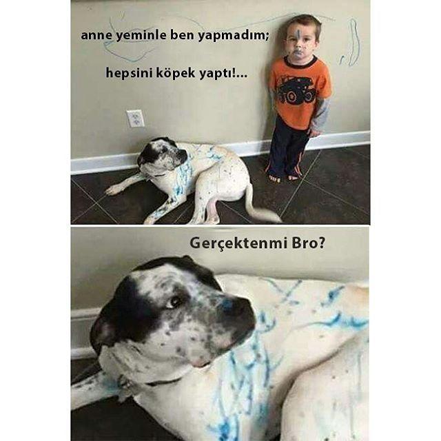 #caps #capsler #komik #gülümse #mizah #espiri #gülümsetenkareler #komedi #bebekler #çocuk #çocuklar #köpek #köpekler #köpekcik #dog #funnydog #funnydogs #funny #friends #masum #masumane #masumca #iftira #suç #crime #duvarboyası #boya #graffiti #bro #brothers http://turkrazzi.com/ipost/1514736631126270608/?code=BUFbPDKjaKQ