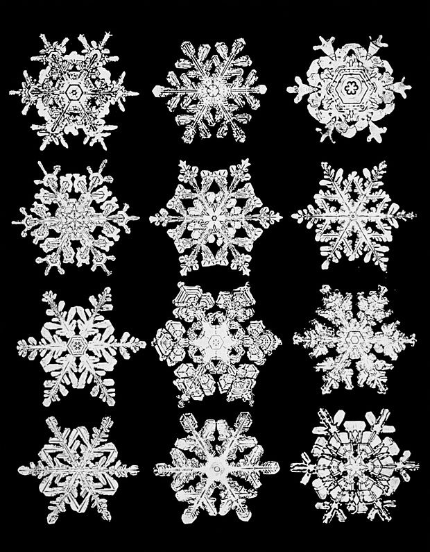 Wilson Bentley's snowflake photos circa 1902