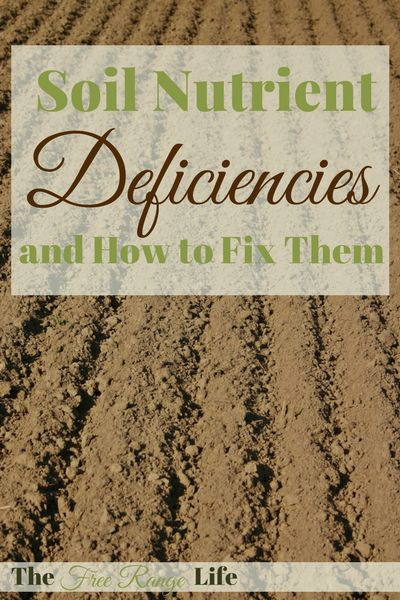 Soil improvement is a never ending job for the organic gardener. Learn how to spot common soil nutrient deficiencies and how to fix them.