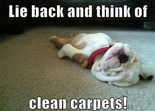 Drier! Cleaner! Healthier! Truly the deepest clean you can get in Johnson County, TX, and it is dry in 1-2 hours!  Carpet, Rugs, Upholstery, Mattresses, and Granite Countertops.  Call us Today!  817-558-3113.