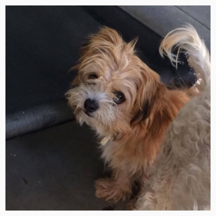 Save SBC Shelter Pups Liked · 11 hrs ·     Jazzy needs out October 18 ID #A474213  Jazzy is 5 month old female puppy , very sweet !  Please contact San Bernardino City Shelter for any more information regarding dog . 909-384-1304 — with Betsy Rue and Galit Reuben.