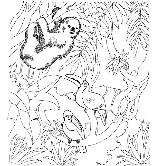 zoo animal coloring sheet