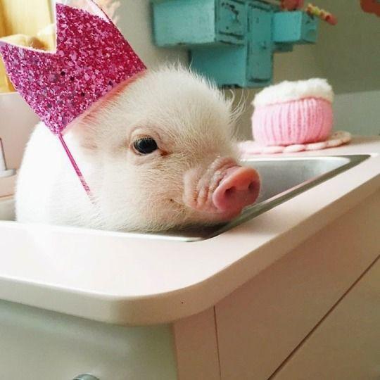 animalz-blogz:Daily updated animals blog!