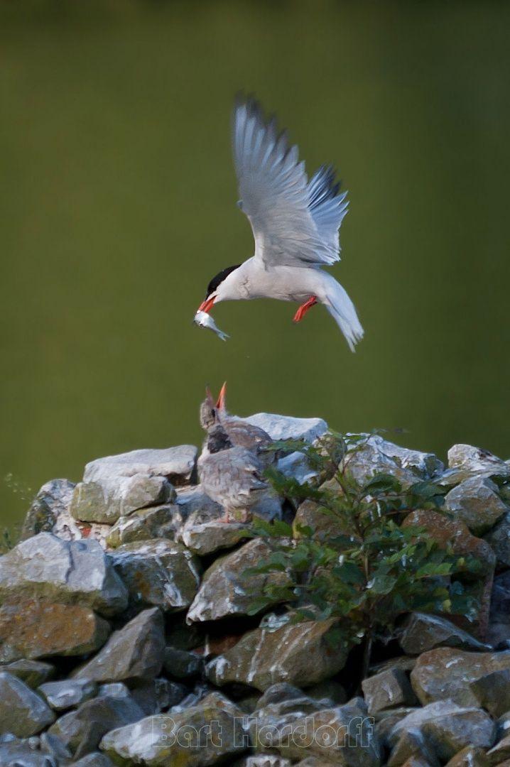 Zie deze afbeelding op Fotoclub De Ontspanner: