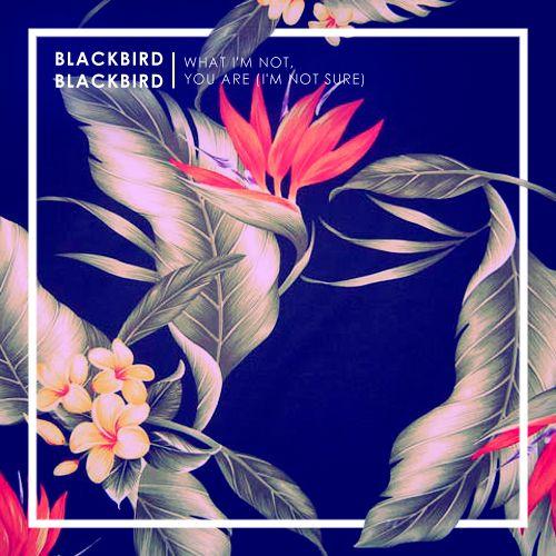 Blackbird Blackbird - Singles - Samüel Johnson