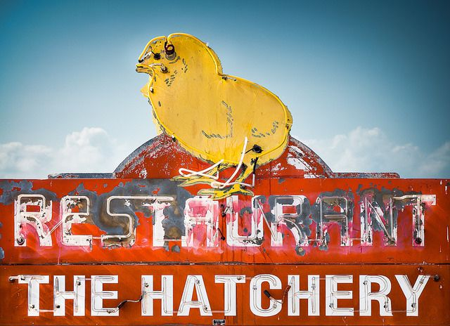 the hatchery restaurant petaluma ca vintage neon sign vintage neon