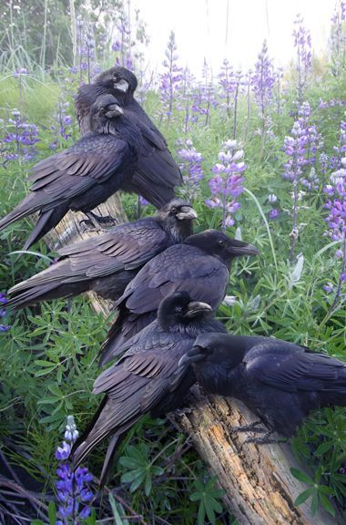 4. A murder of crows sat with their black talons scraping against the terracotta tiles of the roof, their obsidian wings indignantly beating the air, and their matte beaks prodding the window panes of the funeral home. How appropriate it was.