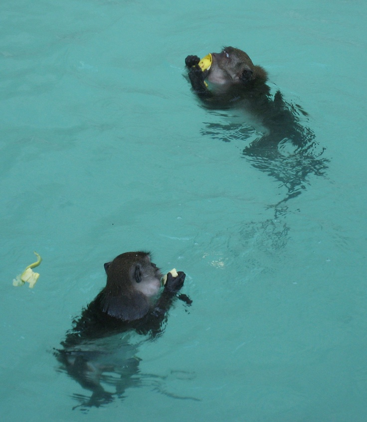 Phi Phi Beach: Phi Phi Island Monkeys