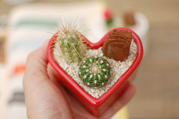 Hoje é comemorado nos EUA o Valentine's Day, o nosso dia dos namorados é em 12 de junho. A história do Dia de São Valentim remonta a ...