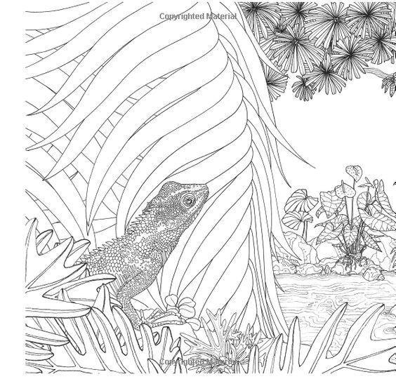 326 besten coloring reptile Bilder auf Pinterest