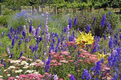Colorful summer delphinium and lily flower garden