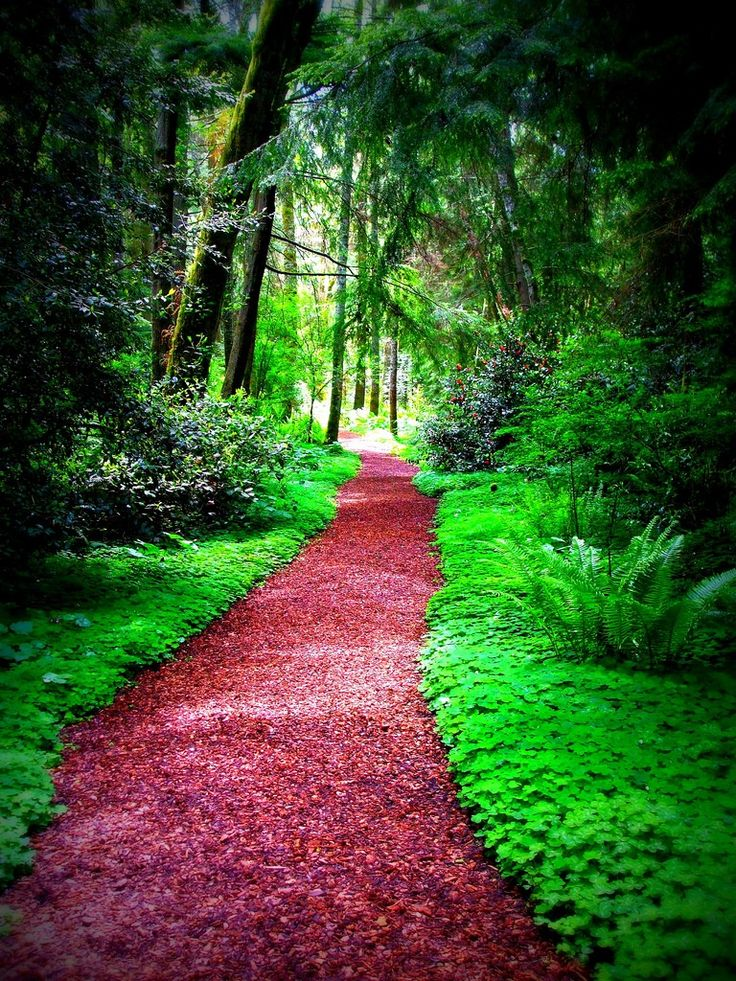 25 best beautiful pathways images on pinterest pathways Pathway images
