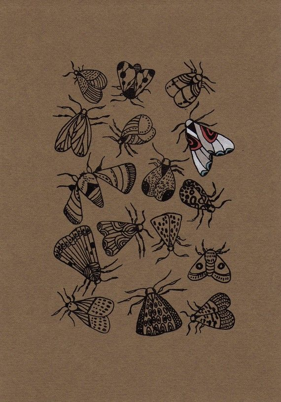 moth #art #wings