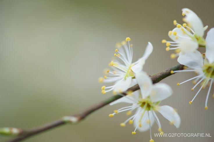 flower, spring, blossom, white