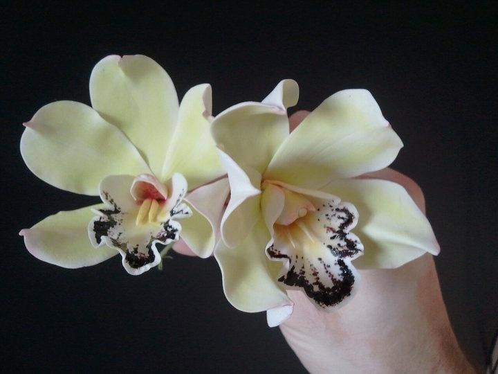 Green Cymbidium Orchids