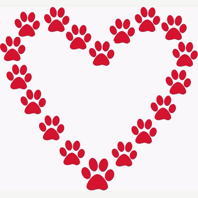 Paw-some heart pic #valentines day