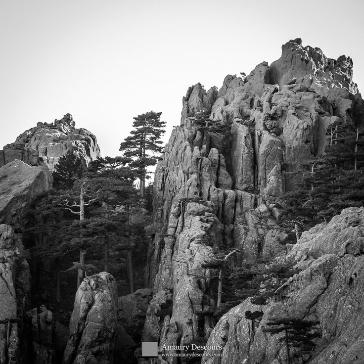 Laricio pines and rocks, Calanca Murata, Bavella, Corsica, France, 2012 © Amaury Descours - All rights reserved
