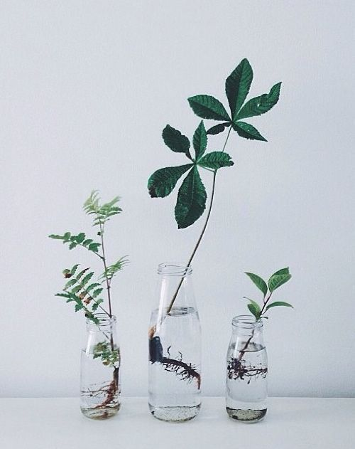 plant cuttings in water