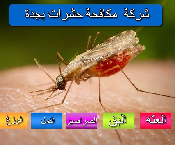 شركة مكافحة حشرات بجدة لايجار01011916991 العته النمل الصراصيرشركة مكافحة حشرات بجدة كيف تقضى على الحشرات الضارة بمنزلك والتى قد تسبب لك اضرار كبيرة وتسبب الام