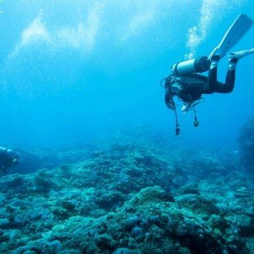 diving-in-taganga-tour-santa-marta-colombia-lulo
