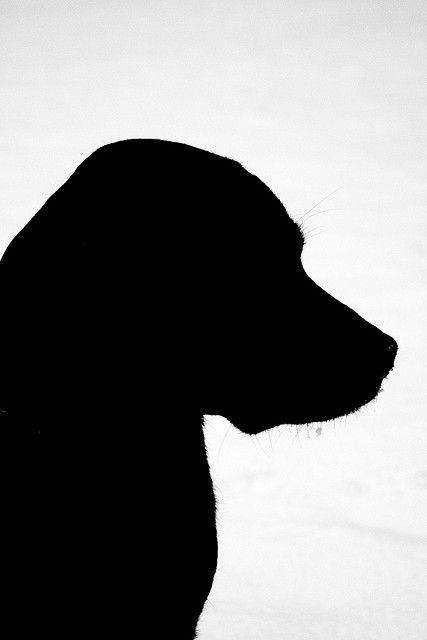 Dog Silhouette - love just the upper body